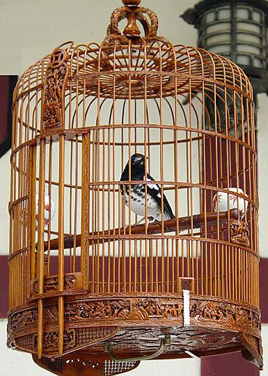 cages hong kong